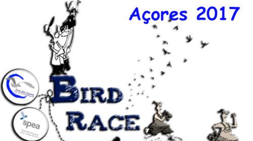 BirdRace Açores para promover observação de aves