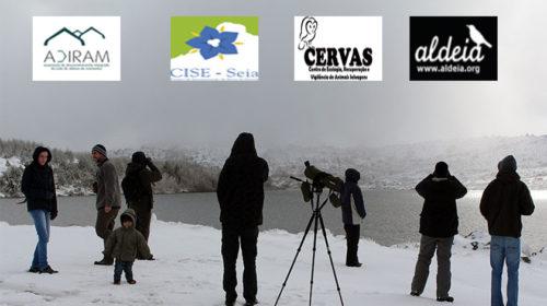Serra da Estrela: um destino de birdwatching de aves invernantes de montanha